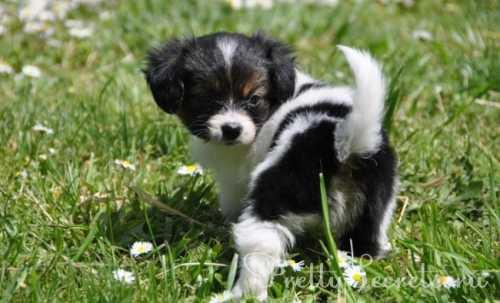 порода собаки для твоего знака зодиака: идеальная пара фото