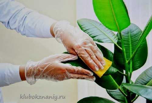 цветочная гомеопатия баха одержите победу над суетой